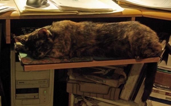 cat on keyboard shelf