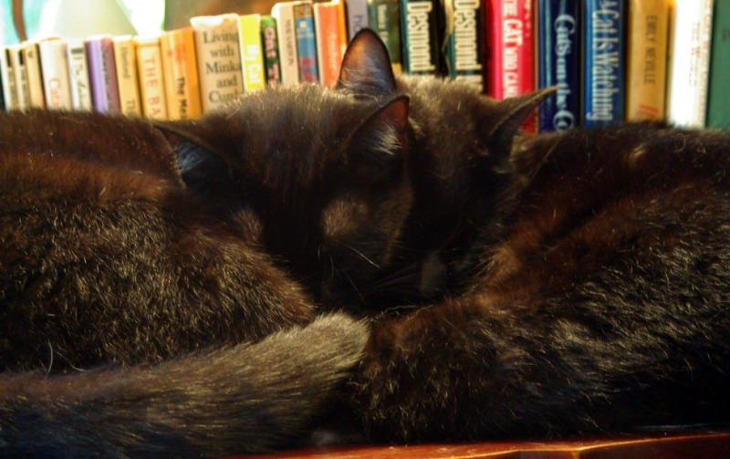two black cats cuddling with books