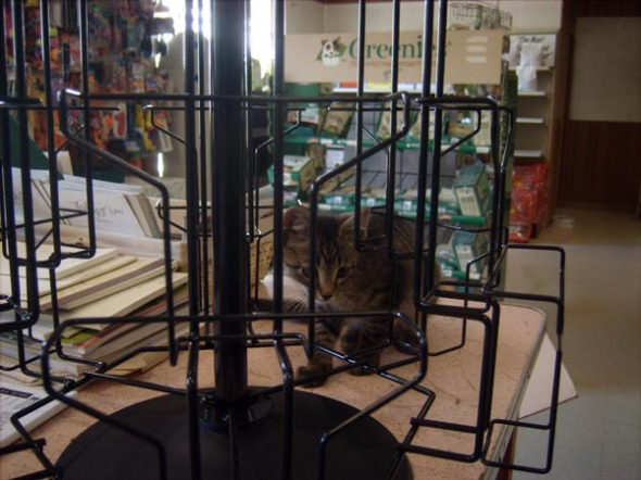kitten with empty card rack