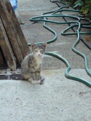 Urban forest kitten