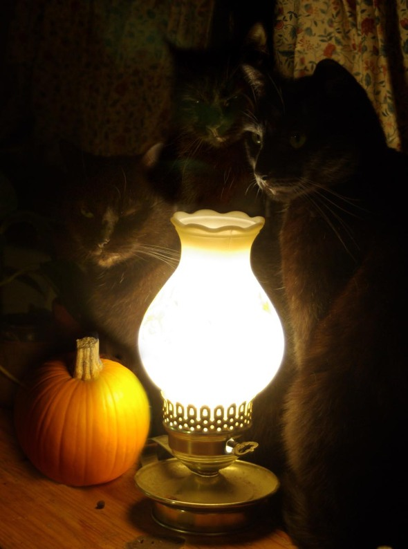 Three cats with pumpkin and lamp