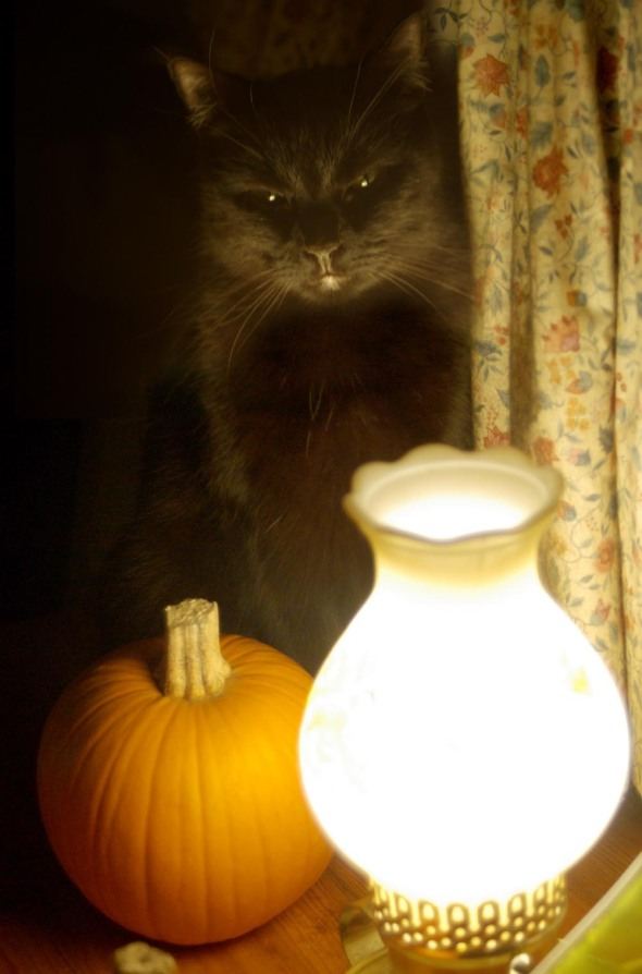 black cat with pumpkin and lamp