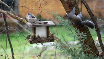 Your Backyard Wildlife Habitat Fall Cleanup Bird Feeding And Fleas The Creative Cat