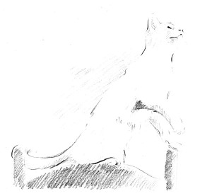 pencil sketch of kitty on chair