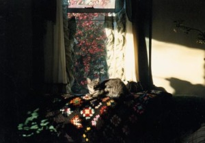 cat on patterned blanket
