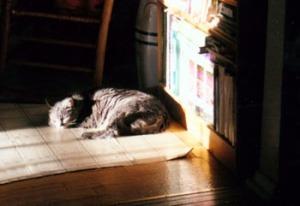 cat sleeping by bookshelf