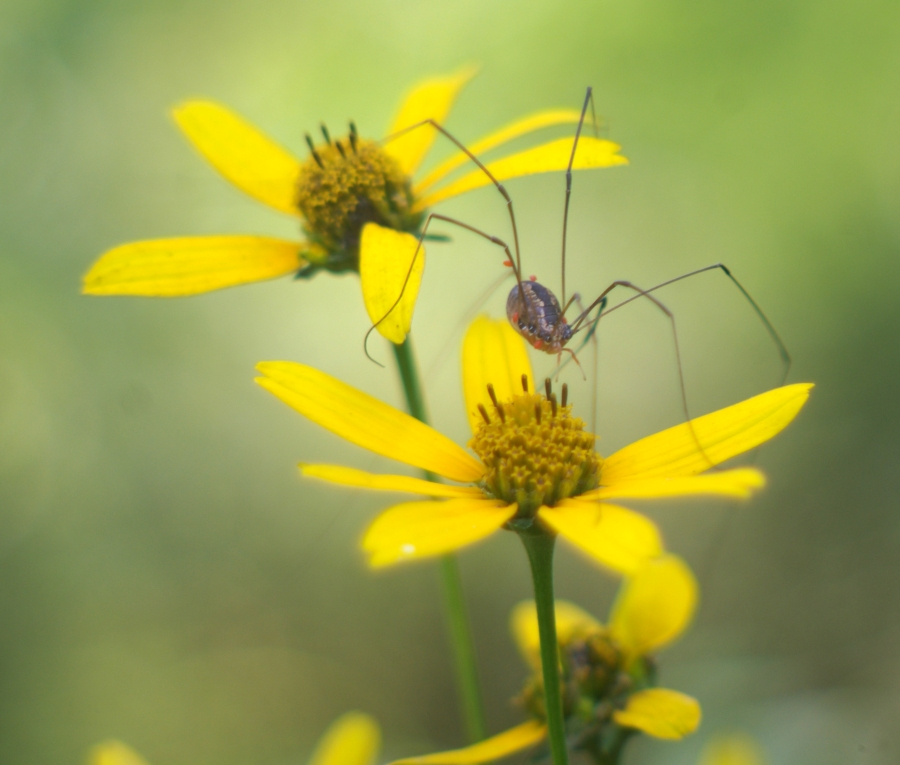 spider on flower
