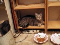 dickie in the bookshelf
