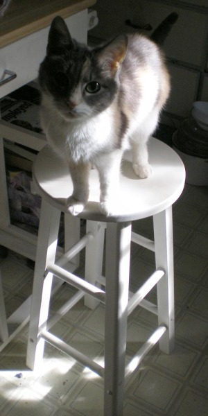 calico cat on stool