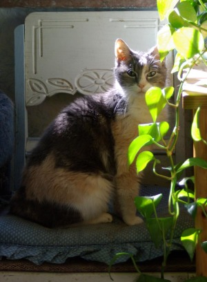 calico cat with plant