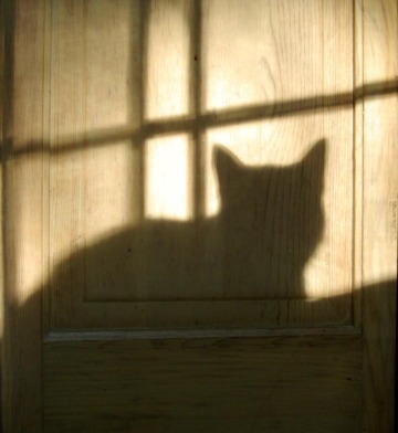 cat shadow on door