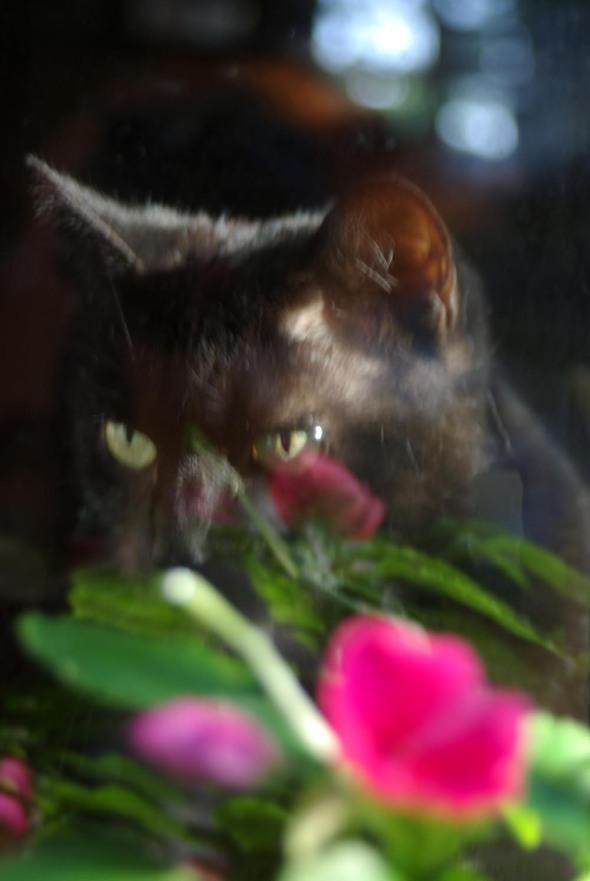 black cat with pink impatiens