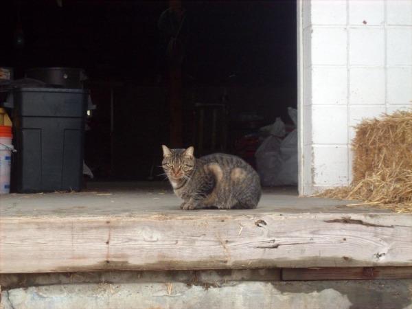 tabby cat in doorway
