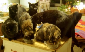 seven cats in kitchen