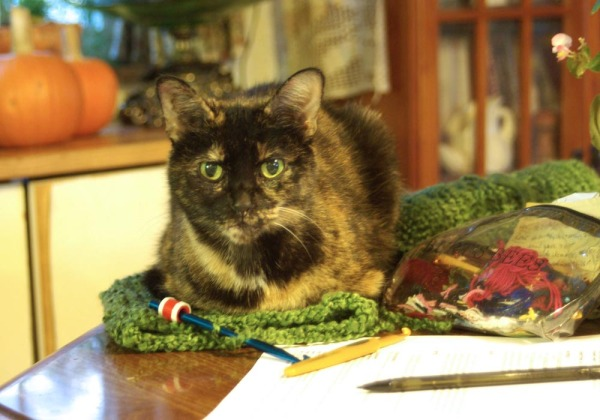cat on crochet project