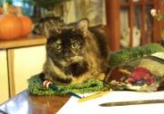 cat on crochet project