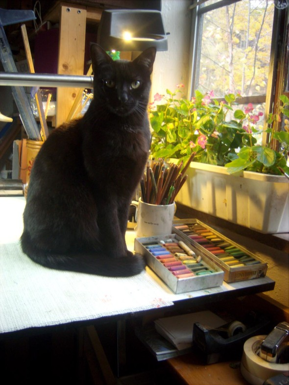 black cat on drawing table