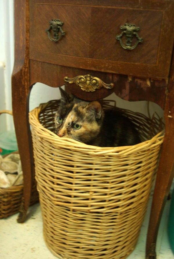 cat in laundry basket under table