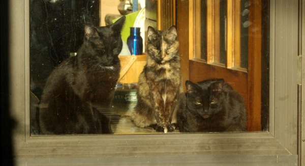 three cats looking out door