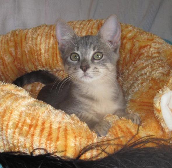 kitten in cat bed