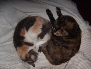 peaches and cookie sleeping