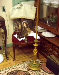 tortie cat on chair