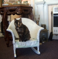 tortie cat in wicker rocker