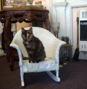 tortie cat in wicker rocker