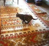 tortie on native patterned carpet