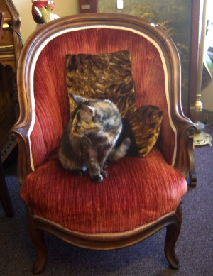 cookie in the red chair