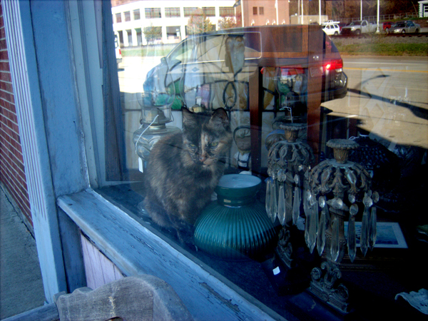 tortie cat in front window