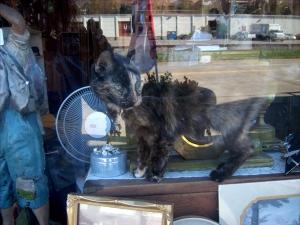 cat in shop window