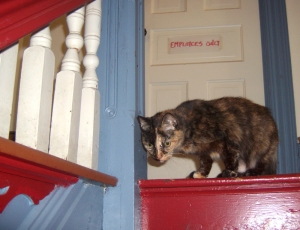 cat at top of steps