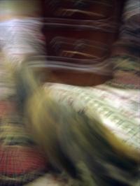 blur of cat