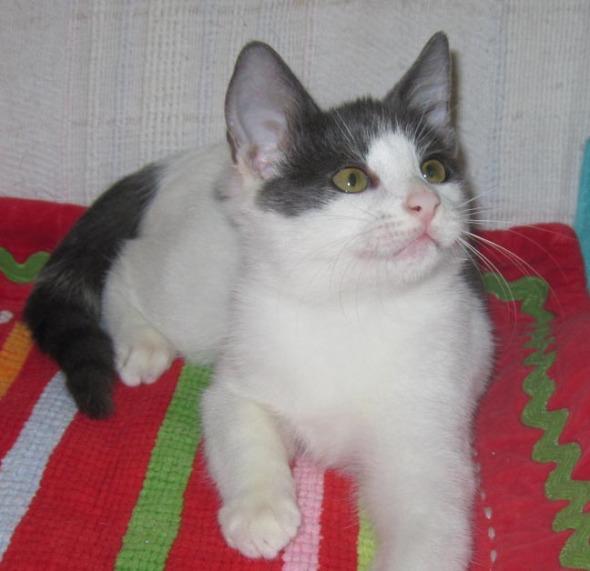 kitten on holiday rug