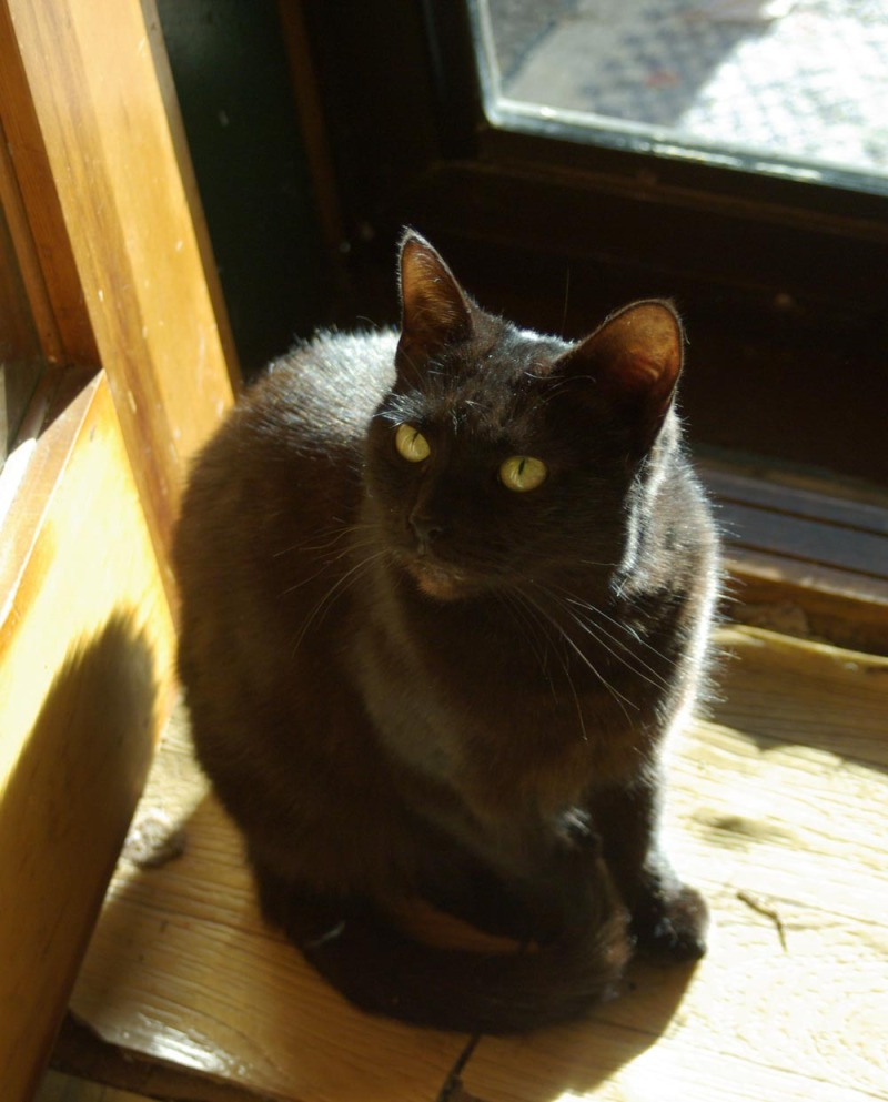 photo of black cat by door