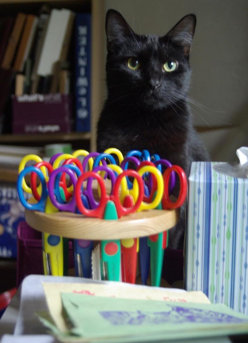 cat with art materials