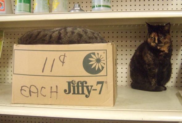 cat on shelf and cat in box