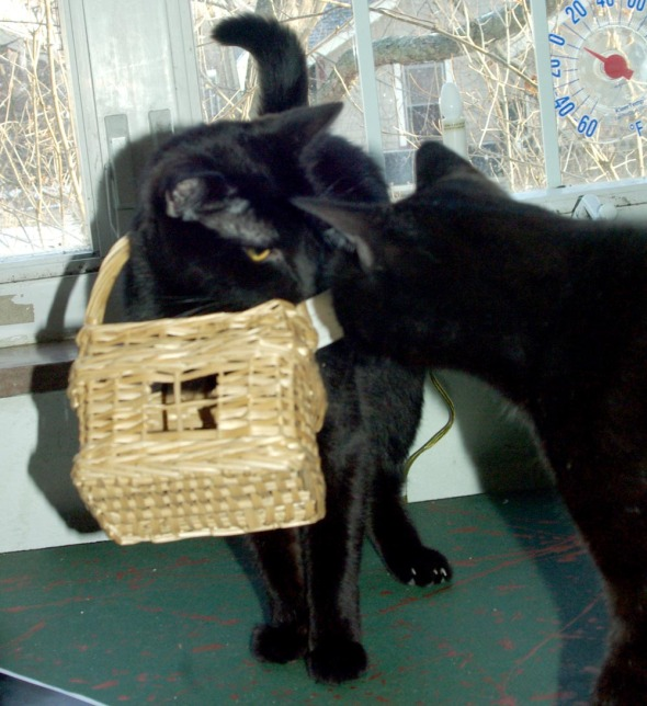 black cats with basket