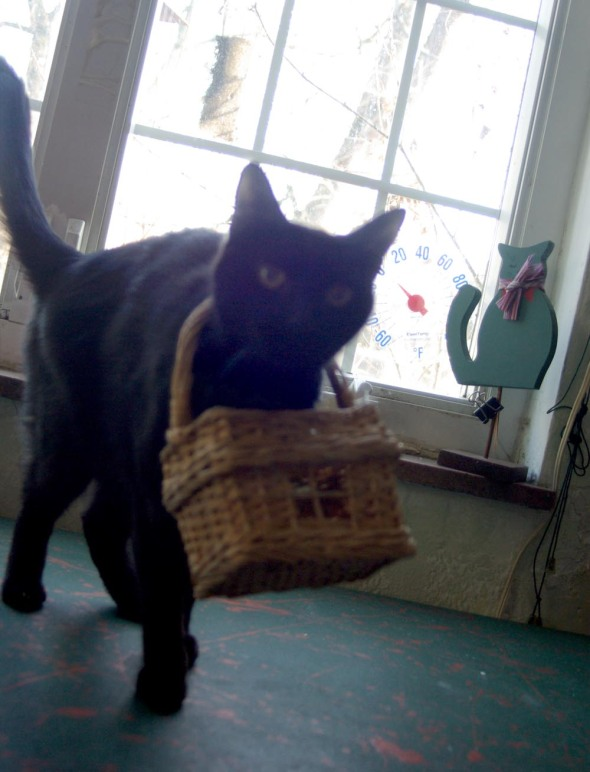 black cat with basket on his neck