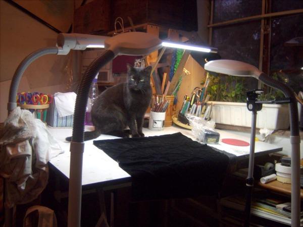 black cat on photo set