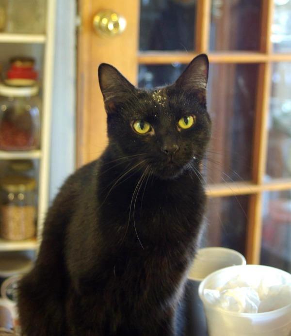 black cat in the kitchen