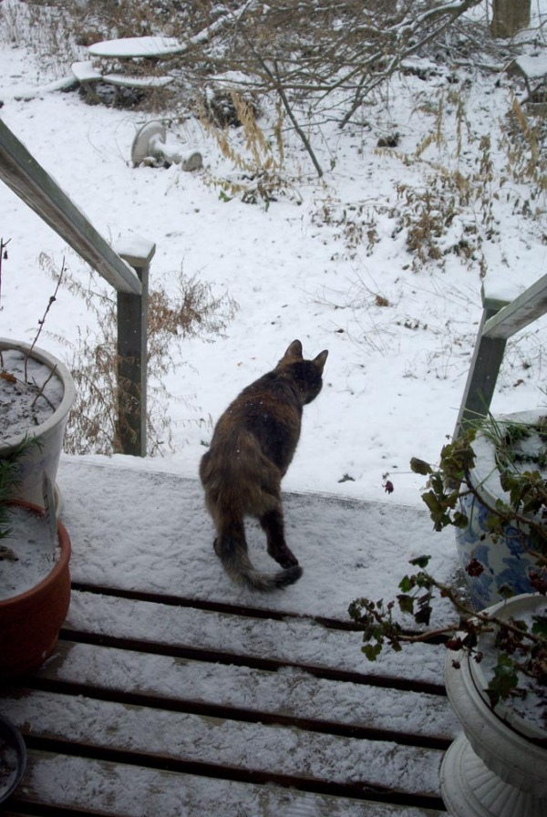 cat in snow on deck