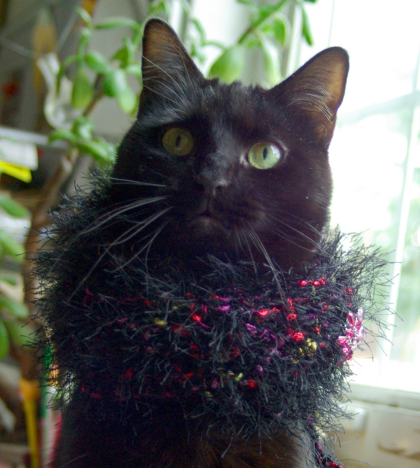 black cat with crocheted collar and vintage pin