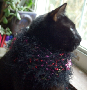 black cat with crocheted collar