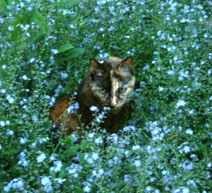 tortoiseshell cat in forget me nots