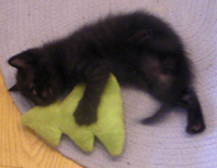 black kitten with toy