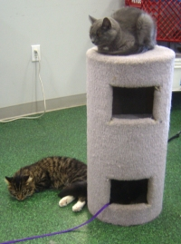 two cats with cat tree