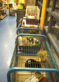 animal cages in the hallway