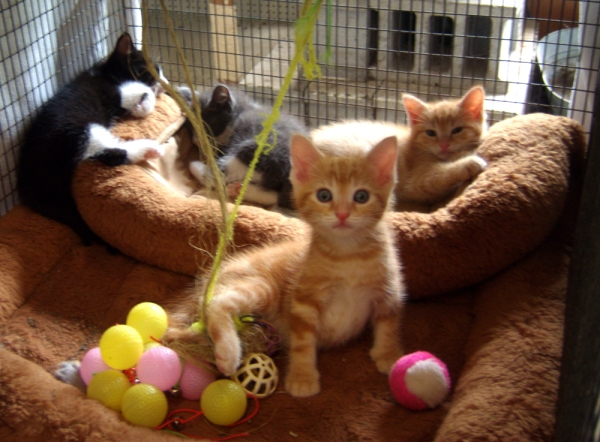 kittens in adoption cage